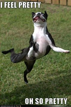 dancing doggy