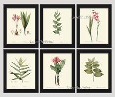 Botanical Print Set of 6 Art 8X10 Redoute Antique by LoveThePrint