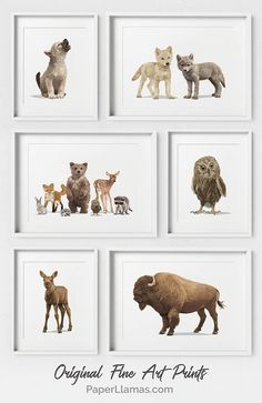 Adventure and forest baby animal art series from Paper Llamas. They have tuns of classic baby animal portraits to fit a woodland themed baby room. Baby Room Themes, Nursery Themes, Nursery Prints, Nursery Art, Girl Nursery, Bear Nursery, Nursery Ideas, Woodland Animal Nursery, Forest Nursery