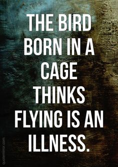 Bird born in a cage thinks flying is an illness. – #freedom #proverb #wisdom http://quotemirror.com/s/z0wmt