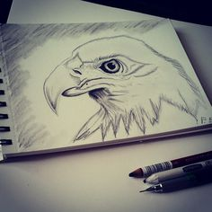 #eagle #drawing