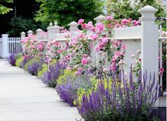 Flowers in front and through a white picket fence. Garden Spaces - traditional - landscape - other metro - dabah landscape designs. Rosen Beet, Chicago Landscape, Fence Landscaping, Landscaping Software, Landscaping Contractors, Luxury Landscaping, Landscaping Company, California Front Yard Landscaping Ideas, Front Walkway Landscaping