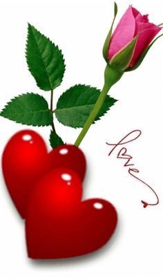 Red rose for you I Love You Images, Love You Gif, Beautiful Love Pictures, Free To Use Images, Beautiful Gif, Love Wallpapers Romantic, Beautiful Flowers Wallpapers, Beautiful Rose Flowers, Love Rose