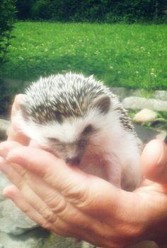 Hedgehog Molly was in the garden. :-)