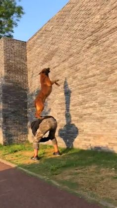 Funny Animal Videos, Cute Funny Animals, Cute Baby Animals, Funny Dogs, Animals And Pets, Cute Dogs, Military Dogs, Police Dogs, Jumping Dog