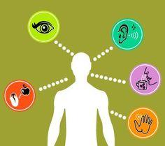 Maku-, näkö-, kuulo- haju- ja tuntoaistit