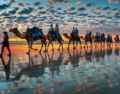 Mirrored camels and a colourful sky. Broome Western Australia