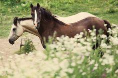 Beautiful horses..