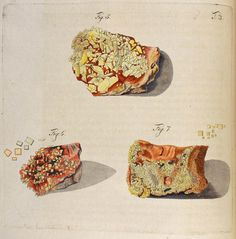 Wulfen, Franz Xavier(1785) Mineralogy, Rocks And Minerals, Woodblock Print, Botanical Illustration, Fossils, Vintage Prints, Geology, Gemstones, Art Prints