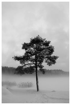 lonely tree by the frozen lake