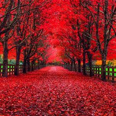 """""""I was driving down this country road in Snoqualmie, Washington state . and had to pull over because the beauty was overwhelming. King County Washington, Washington State, Farm Kings, Autumn Scenes, Tree Photography, Inspiring Photography, Fall Photos, Fall Pics, Fall Pictures"""