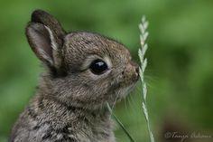 Милые животные от фотографа Tanja Askani