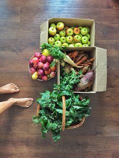 Domáca zelenina a ovocie ...