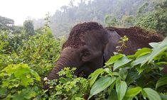Should vegans eat palm oil? | Guardian Sustainable Business | The Guardian
