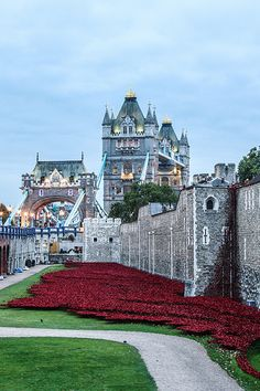 Tower of London with Remembrance Poppies & the Tower Bridge in the background