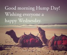 Good Morning Happy Hump Day good morning wednesday hump day humpday wednesday quotes good morning quotes happy wednesday wednesday quote happy wednesday quotes