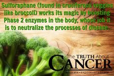 """It's time to stop """"baby-stepping"""" solutions to cancer. Read about a major breakthrough, Dr. Talalay's game-changing sulforaphane (found in cruciferous veggies like broccoli) study! Article by Dr. Veronique Desaulniers. Click through to read & re-pin to help us spread the truth & educate others! // The Truth About Cancer"""