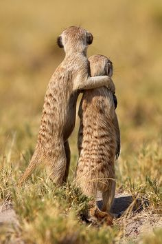 "https://flic.kr/p/9KtVqG | Some day, my son ... | this all will be yours  Meercats @ Makgadikadi Pan   Thanks for more than 900 faves!!!!!!!   Copyright Thomas Retterath/Barcroft Media absolutely no publication without permission of Barcroft media (<a href=""http://www.barcroftmedia.com"" rel=""nofollow"">www.barcroftmedia.com</a>)   explore # 30, 21.05.2011"