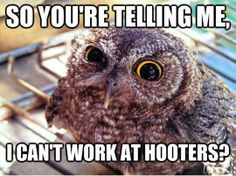 Skeptical Owl on job hunting… reminds me of the council