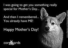 The Daily Corgi: Happy Mother's Day! #corgi