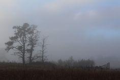 Misty winter morning #startthedaywithsomethingbeautiful