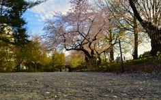 Central Park Sidewalks