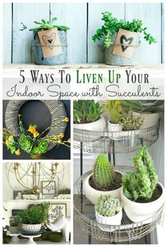 5 ways to Liven Up your indoor space with succulents