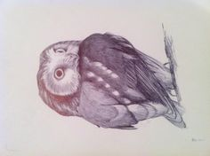 Ballpoint pen drawing of a Saw-whet Owl.
