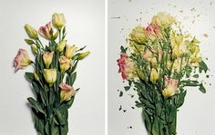 This is what happens when flowers are soaked in liquid nitrogen for 30 minutes and are then photographed after being catapulted at a very high speed onto a white surface. We can all thank New York photographer, Jon Shireman, for discovering such rad a thing.    p.s. if  you're into this you may also like qi wei's 'exploded flowers.'