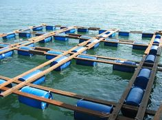 Net Cage and Pond Grouper Fish Farming Method - Frozen Grouper Fish, Grouper Fish Wholesale, Grouper Fish for Sale, Grouper Fish Suppliers Floating Boat Docks, Floating House, Floating Restaurant, Outdoor Restaurant, Aqua Farm, Grouper Fish, Cages For Sale, Floating Architecture, Glass Boat