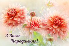 Birthday Images, Happy Birthday, Cards, Celebration, Birthday, Happy Brithday, Birthday Pictures, Urari La Multi Ani, Happy Birthday Funny