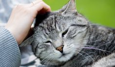 Ten ways that your cat says I love you!
