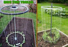 DIY Bike Rim Trellis For The Peas http://www.suitedtotheseasons.com/2010/09/peas-and-raspberries.html  Are you looking to do a little gardening in an nontraditional way? You can build a trellis and grow your own crops in a neat and tidy way, and add beauty to your yard while doing it. Using bicycle tire rims, you can create a trellis that is both good looking and useful. This trellis can then be used to grow your own raspberries, peas, and more.