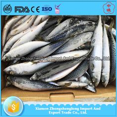 Big Size 300-500g Good Quality Frozen Pacific Mackerel WR Wholesale Price.