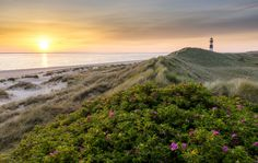 https://flic.kr/p/nR3bMD | Ellenbogen | PRESS L  Dreamy sunrise on the dunes at the Ellenbogen on the island Sylt with the lighthouse List East in the background   Hello Flickr-Friends :) I'm back from my vacation at the north sea. I came back with a lot of photos from Sylt, St. Peter-Ording and Hamburg.  Hope you like it (:   thanks for all visits and comments!