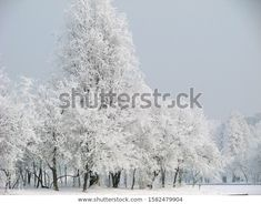 Park Winter Landscape Frozen White Fairy Stock Photo (Edit Now) 1582479904 Winter Landscape, Photo Editing, Royalty Free Stock Photos, Frozen, Fairy, Illustration, Photography, Outdoor, Editing Photos