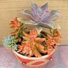Succulents - Love the color combo
