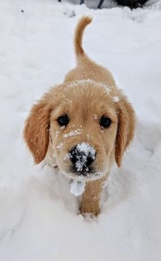 Super Cute Puppies, Cute Baby Dogs, Cute Little Puppies, Super Cute Animals, Cute Little Animals, Cute Funny Animals, Adorable Dogs, Animals In Snow, Cute Puppy Pics