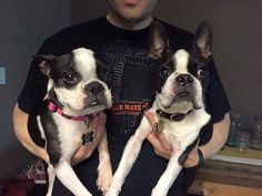 FABULOUS UPDATE! Remember the 7 year old girl Boston at the North Central shelter we posted about last week? Well, we got this fabulous update from her new furever family! Way to go Gertie!!!! And way to go Gertie's family!!! Thanks for sharing with us!!!
