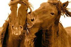 # HORSES