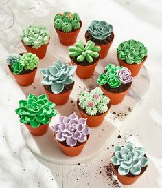 Because bakers can be green-fingered too, we've created a whole range of summery succulents that let you demonstrate your decorating and prove your piping Cake Decorating Designs, Creative Cake Decorating, Creative Cakes, Cake Designs, Motor Cake, Succulent Cupcakes, Buckwheat Cake, Plain Cake, Summer Cakes