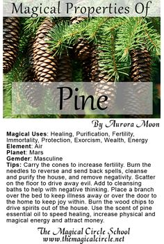 The Magical Properties of Pine created by Aurora Moon for The Magical Circle School www.themagicalcircle.net