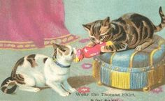 Kitten with Christmas cracker. Illustration by Helena Maguire.