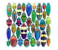 colorful beetles to paint on stones