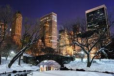 FUNNY GALLERY: Central park winter night