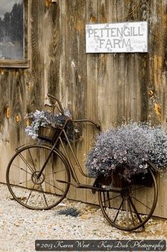 Vintage bike with flowers at .- Vintage Fahrrad mit Blumen bei (c) 2013 Ka … Vintage Bicycle with flowers (c) 2013 Ka … – – - Bicycle Decor, Old Bicycle, Bicycle Art, Old Bikes, Deco Floral, Outdoor Planters, Vintage Bicycles, Yard Art, Dried Flowers