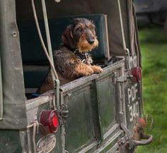 Land Rover: a perfect place for a perfect companion. Land Rovers, Scottish Terrier, Thelma Et Louise, Animals And Pets, Cute Animals, Land Rover Models, Wire Haired Dachshund, Dachshund Love, Daschund