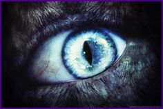 Loup-Garou Is French For Werewolf ~ Soon The Moon Will Take Control ~ Come And Read This If You Aren't Afraid ~