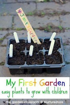 plants to grow with children Here's a guide to easy plants to grow with children to get them started on 'My First Garden' from James .ukHere's a guide to easy plants to grow with children to get them started on 'My First Garden' from James . Easy Plants To Grow, Cool Plants, Spring Activities, Toddler Activities, Starting A Garden, Outdoor Classroom, Outdoor School, Easy Garden, Kid Garden
