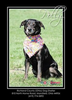 SUPER URGENT!!!!>>>> PLEASE RESCUE THIS SWEET GIRL POLLY (sweetheart) MANSFIELD, OHIO... Polly